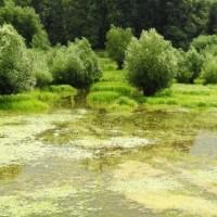 Evropska komisija objavila plan za zaštitu biodiverziteta